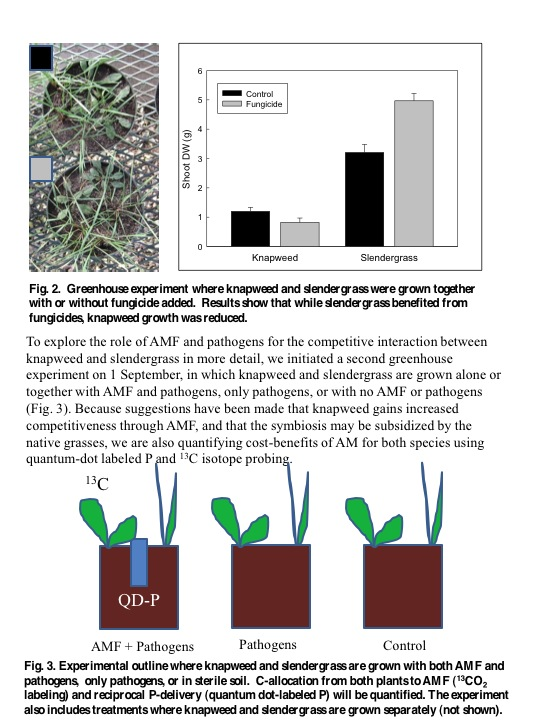How Do Soil Fungi Affect Plant Invasion: AMF and Pathogens