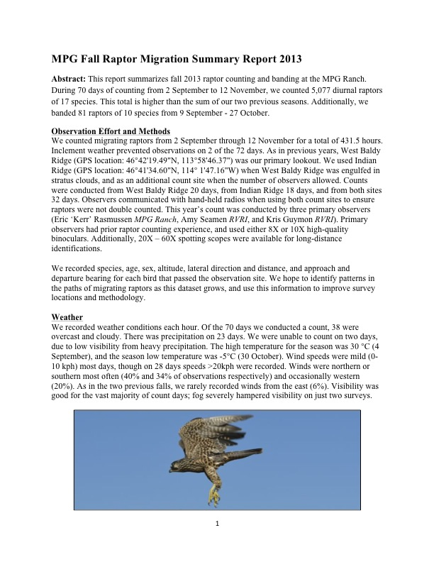 "MPG Fall Raptor Migration Summary Report 2013 Abstract: This report summarizes fall 2013 raptor counting and banding at the MPG Ranch. During 70 days of counting from 2 September to 12 November, we counted 5,077 diurnal raptors of 17 species. This total is higher than the sum of our two previous seasons. Additionally, we banded 81 raptors of 10 species from 9 September - 27 October. Observation Effort and Methods We counted migrating raptors from 2 September through 12 November for a total of 431.5 hours. Inclement weather prevented observations on 2 of the 72 days. As in previous years, West Baldy Ridge (GPS location: 46°42'19.49""N, 113°58'46.37"") was our primary lookout. We used Indian Ridge (GPS location: 46°41'34.60""N, 114° 1'47.16""W) when West Baldy Ridge was engulfed in stratus clouds, and as an additional count site when the number of observers allowed. Counts were conducted from West Baldy Ridge 20 days, from Indian Ridge 18 days, and from both sites 32 days. Observers communicated with hand-held radios when using both count sites to ensure raptors were not double counted. This year's count was conducted by three primary observers (Eric 'Kerr' Rasmussen MPG Ranch, Amy Seamen RVRI, and Kris Guymon RVRI). Primary observers had prior raptor counting experience, and used either 8X or 10X high-quality binoculars. Additionally, 20X – 60X spotting scopes were available for long-distance identifications. We recorded species, age, sex, altitude, lateral direction and distance, and approach and departure bearing for each bird that passed the observation site. We hope to identify patterns in the paths of migrating raptors as this dataset grows, and use this information to improve survey locations and methodology. Weather We recorded weather conditions each hour. Of the 70 days we conducted a count, 38 were overcast and cloudy. There was precipitation on 23 days. We were unable to count on two days, due to low visibility from heavy precipitation. The high temperature for the season was 30 °C (4 September), and the season low temperature was -5°C (30 October). Wind speeds were mild (0- 10 kph) most days, though on 28 days speeds >20kph were recorded. Winds were northern or southern most often (40% and 34% of observations respectively) and occasionally western (20%). As in the two previous falls, we rarely recorded winds from the east (6%). Visibility was good for the vast majority of count days; fog severely hampered visibility on just two surveys."